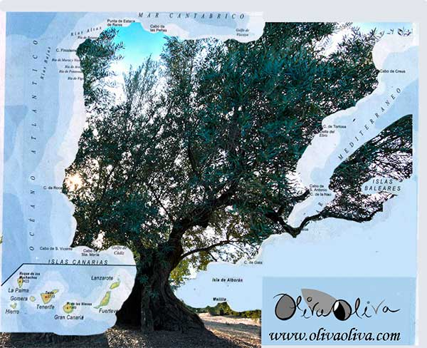 mapa españa en forma de olivo