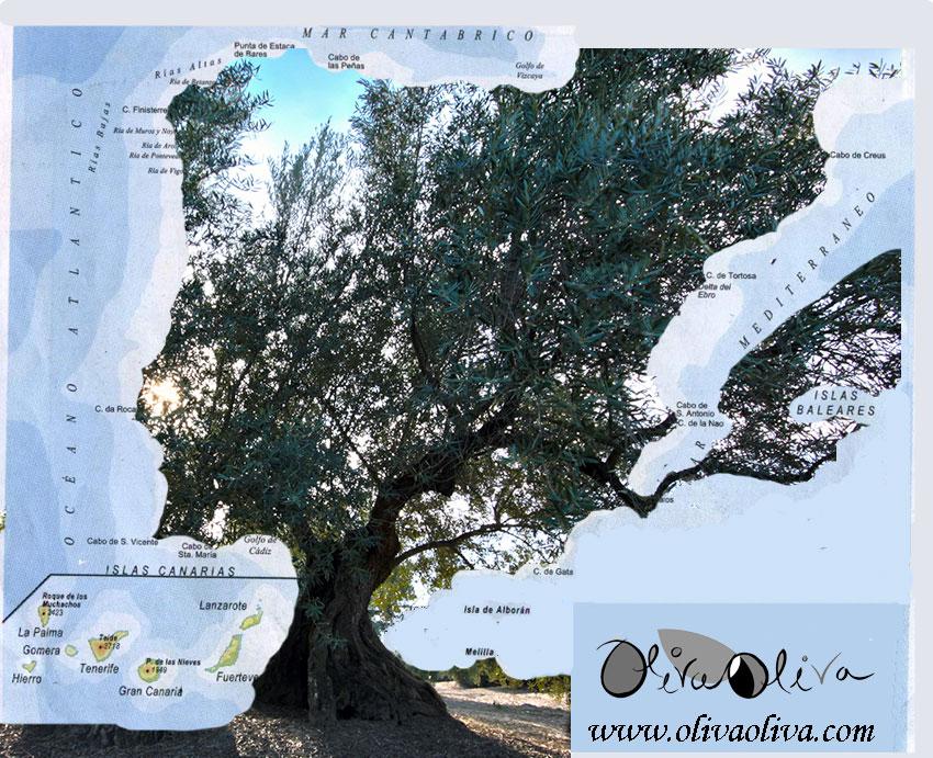 Mapa de España en forma de olivo